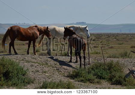 horses in the wetlands of the Everglades bonanza