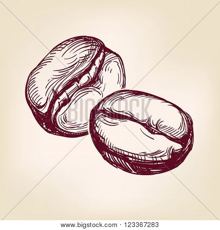 coffee beans sign hand drawn vector llustration realistic sketch