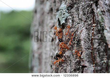 Group of ant