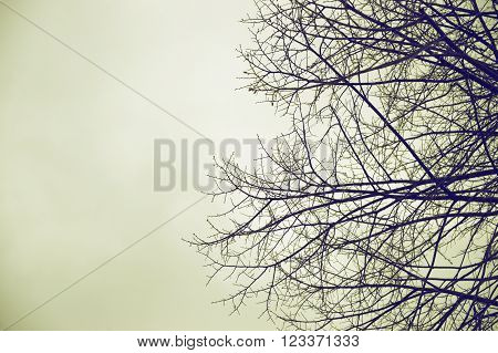 A leafless tree against a grey moody sky. Negative space background and an empty copy space for editor's text.