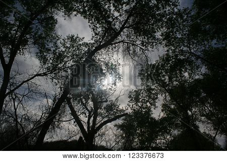 sunlight filtereing through blackened silhouette of trees in the early morning