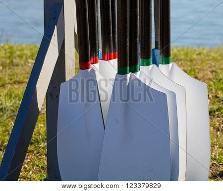 Rowing oars hung in a stand and ready for the regatta
