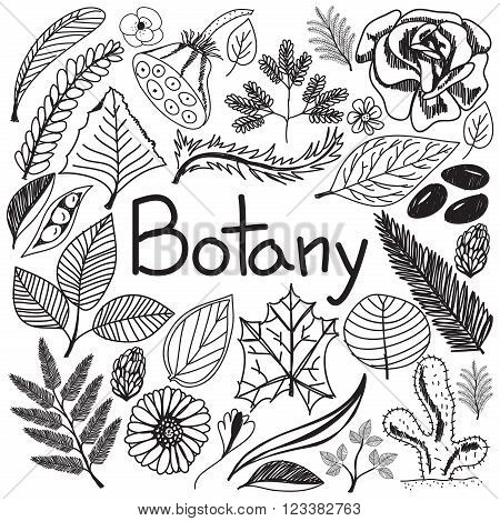 Botany biology doodle handwriting icons plants and trees in white isolated paper background for science education presentation or subject title create by vector