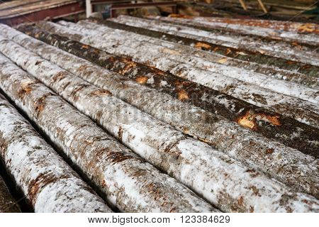 Snow-covered logs lie in row on sawmill, close-up