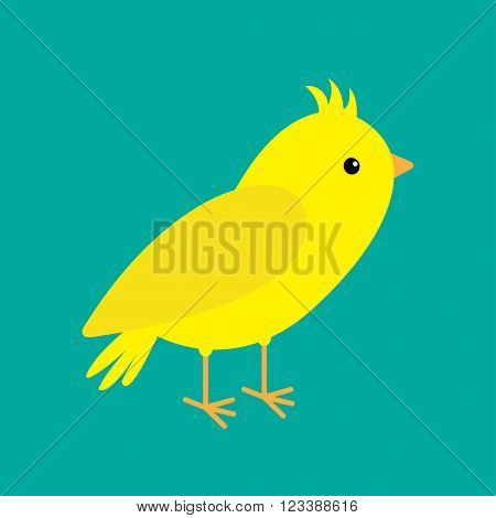 Canary bird. Yellow feather. Green background. Flat design style. Vector illustration