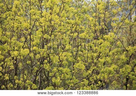 image of many tree at spring day