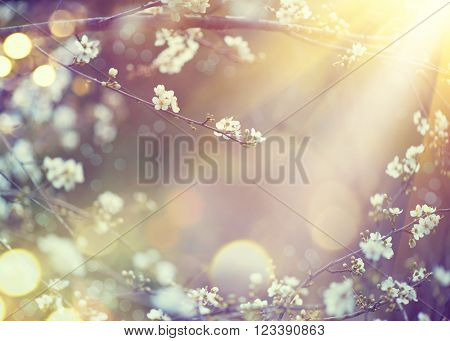 Spring Nature art background with blossom. Beautiful nature scene with blooming tree and sun flare. Sunny day. Spring flowers. Beautiful Orchard. Abstract blurred background. Springtime