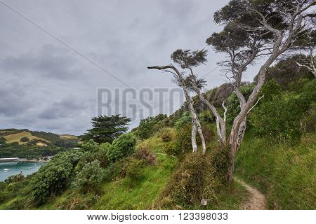 Scenery and landscapes across land and water in Waiheke Island New Zealand