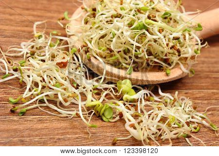 Fresh alfalfa and radish sprouts on wooden scoop lying on wooden table, healthy lifestyle diet food and nutrition