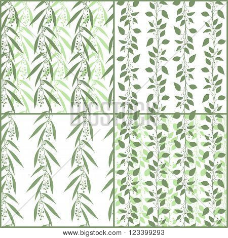 Set of seamless pattern branches of eucalyptus and Camphor laurel. Vector illustration.  Green floral backgrounds