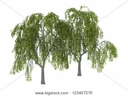 3D Illustration of green willows or sallows or osiers isolated on white background