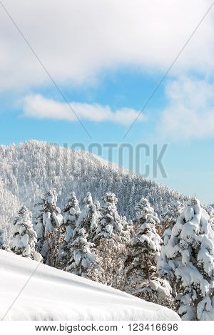 Beautiful Winter Landscape With Snow Covered Trees, Snowfall.