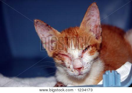 Missbrauch Kätzchen