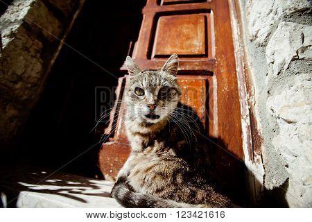 Surprised cat sitting on doorstep over brown door
