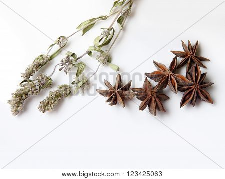 Mint Flowers And Anise