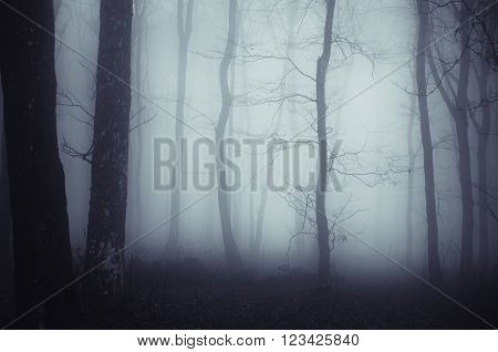 Surreal haunted fantasy forest with mysterious fog