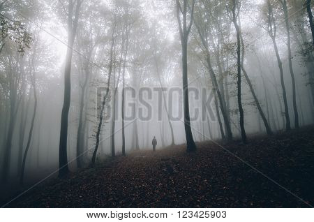 Man in mysterious fantasy forest with fog and giant trees