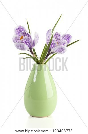 Two Pickwick cultivar crocus flowers in a small vase isolated on white background