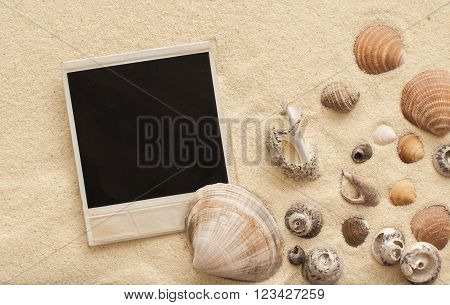 Sea Shells And Polaroid Picture