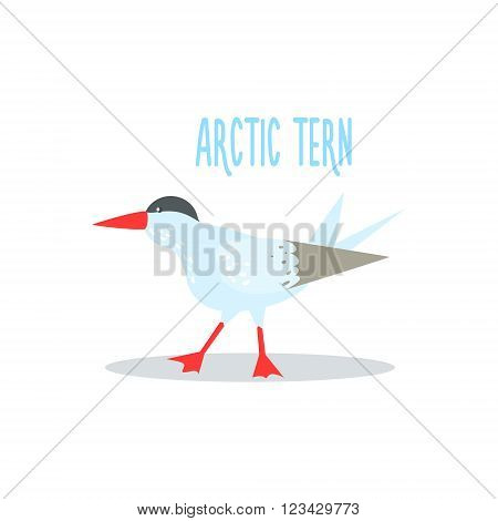 Arctic Tern Drawing For Arctic Animals Collection Of Flat Vector Illustration In Creative Style On White Background