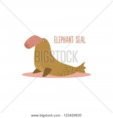 Elephant Seal Drawing For Arctic Animals Collection Of Flat Vector Illustration In Creative Style On White Background