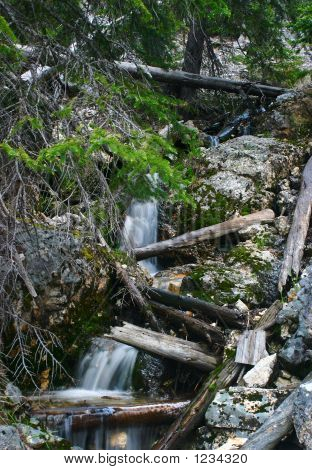 Cascade Through Deadfall