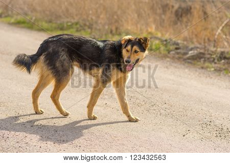 Positive stray dog walking on a street at sunny day