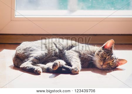 Lazy domestic cat warming in the sun by the window