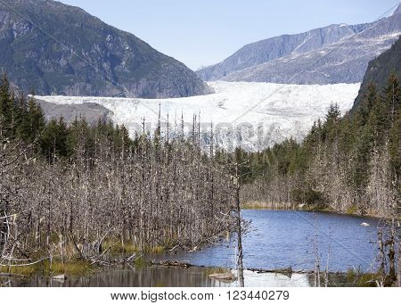 The view through trees of Mendenhall Glacier (Juneau Alaska).