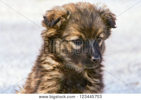Portrait of Mongrel Puppy against Grey Background