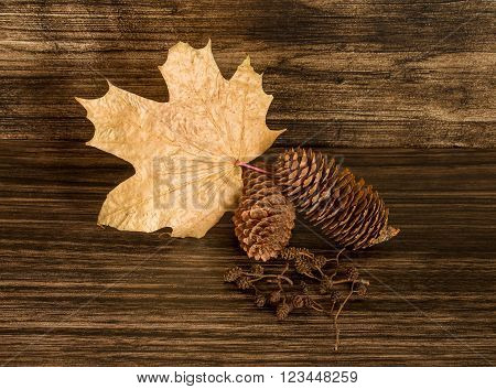 Dry Pine cones leaf and alder cones on the wooden background