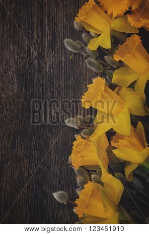 spring fresh  yellow daffodil flowers with catkins border on wooden background, retro toned