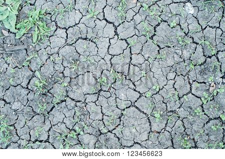 fragment of cracked dry land with green grasses between new life concept