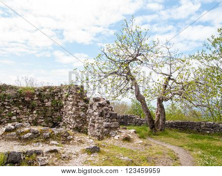 figs near the ancient fortress on the mountain