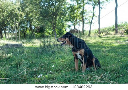 Adorable happy dog outdoors playing, enjoying nature