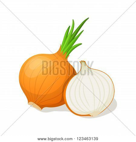 Onion isolated on white. Vector illustration EPS10
