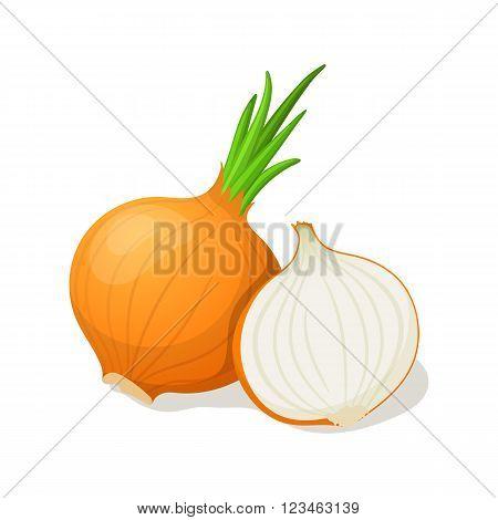Onion isolated on white. Vector illustration EPS10