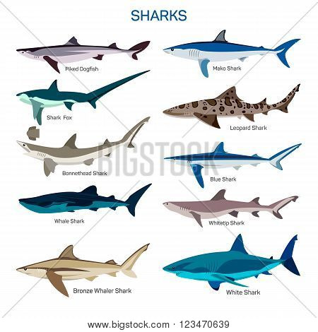 Shark fish vector set in flat style design. Different kind of sharks species icons collection. Isolated on white background.