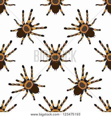 Seamless pattern with . tarantula spider Brachypelma smithi hand-drawn tarantula spider Brachypelma smithi. Vector illustration