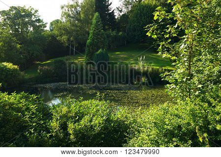Leafy pond in afternoon light, surrounded by mown grass and thick foliage. Taken near Newtown (Powys, Wales, UK).