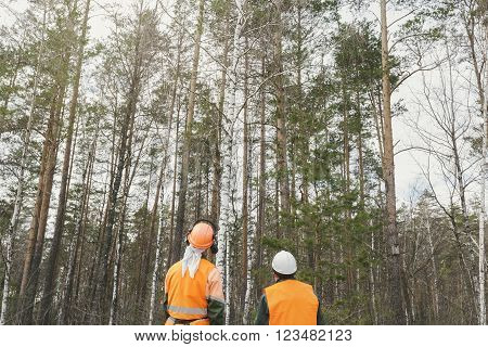 Two cutters of the forest plan the work, the loggers are looking at the forest. Rear view, two in the form of a lumberjack look out over the forest with an axe in his hands.