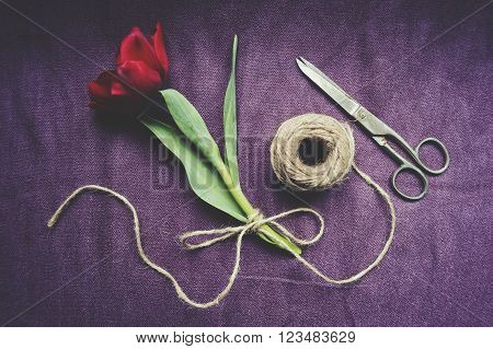 One red tulip, twine and scissors. Top view