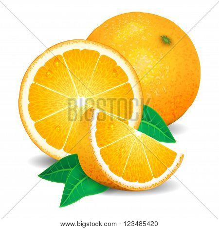 Fresh oranges fruit pieces of orange. Realistic oranges vector illustration on white background