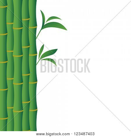 Green background with bamboo stems and place for your text. Vector illustration for beauty salon, yoga studio, eastern medicine clinic. Traditional eastern bamboo stems on white background.
