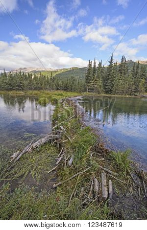 Beaver Dam on Horseshoe Lake in Denali National Park in Alaska
