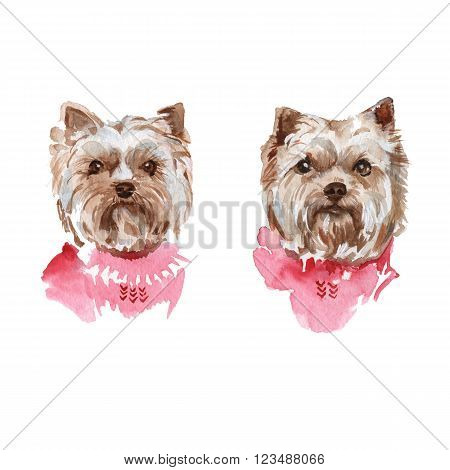 illustration muzzle Yorkie dog breed isolated. watercolor