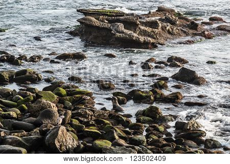 A single seal swimming amid the rocks and rock formations at La Jolla Cove in La Jolla, California.