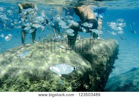 Underwater Shoal Of Fish With People Swimming Around