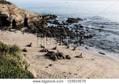 Seals on the beach at La Jolla Cove in La Jolla, California.
