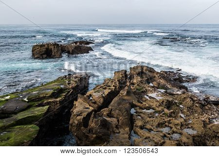 Seals and seagulls on rock formations with ocean and waves in background in La Jolla, California.